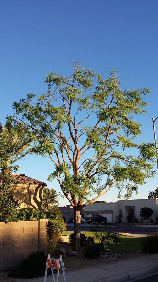 Pendleton Tree Service in Yuma, AZ 85365 ...