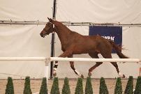 Paardenkliniek De Watermolen BV