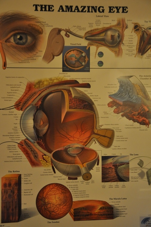 Schroeder Eye Care, LLC image 9