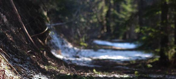 Metsäpalvelu Marko Salminen Ky