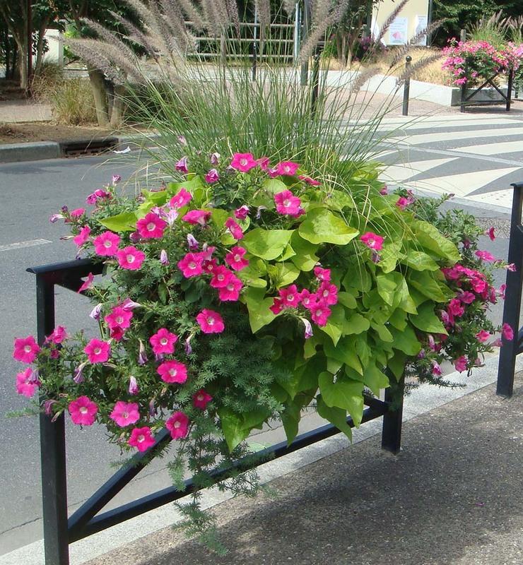 Fleur de Ville Hanging Baskets