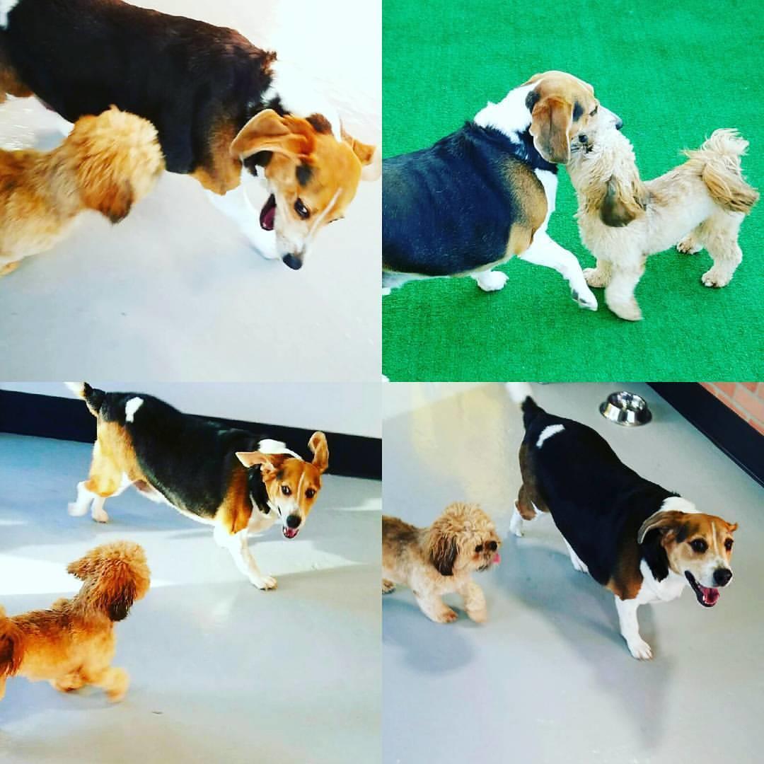 Westhampton Dog Boarding