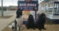 Image 6 | Red Dogs Sandwiches