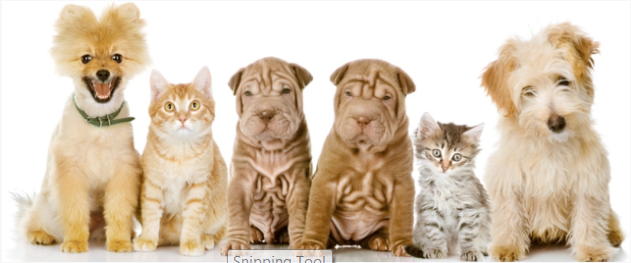 Great Southern Animal Hospital - Columbus, OH 43207 - (614)524-0800 | ShowMeLocal.com