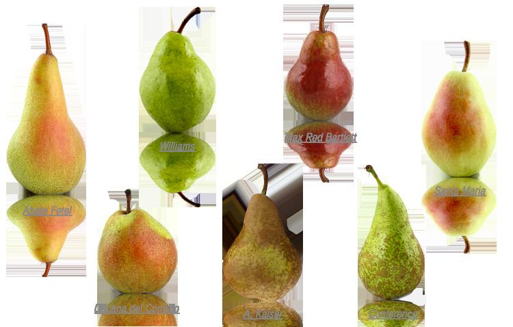 Fruit Modena Group Soc.Coop. Agricola