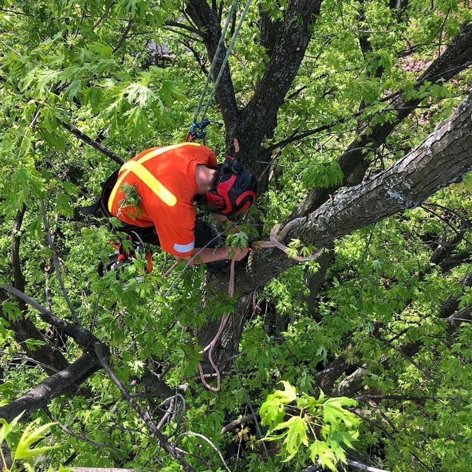 UTS Tree Care