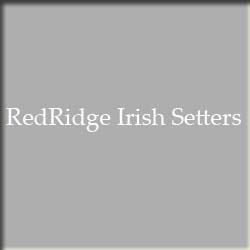 RedRidge Irish Setters - Weston, MO - Breeders