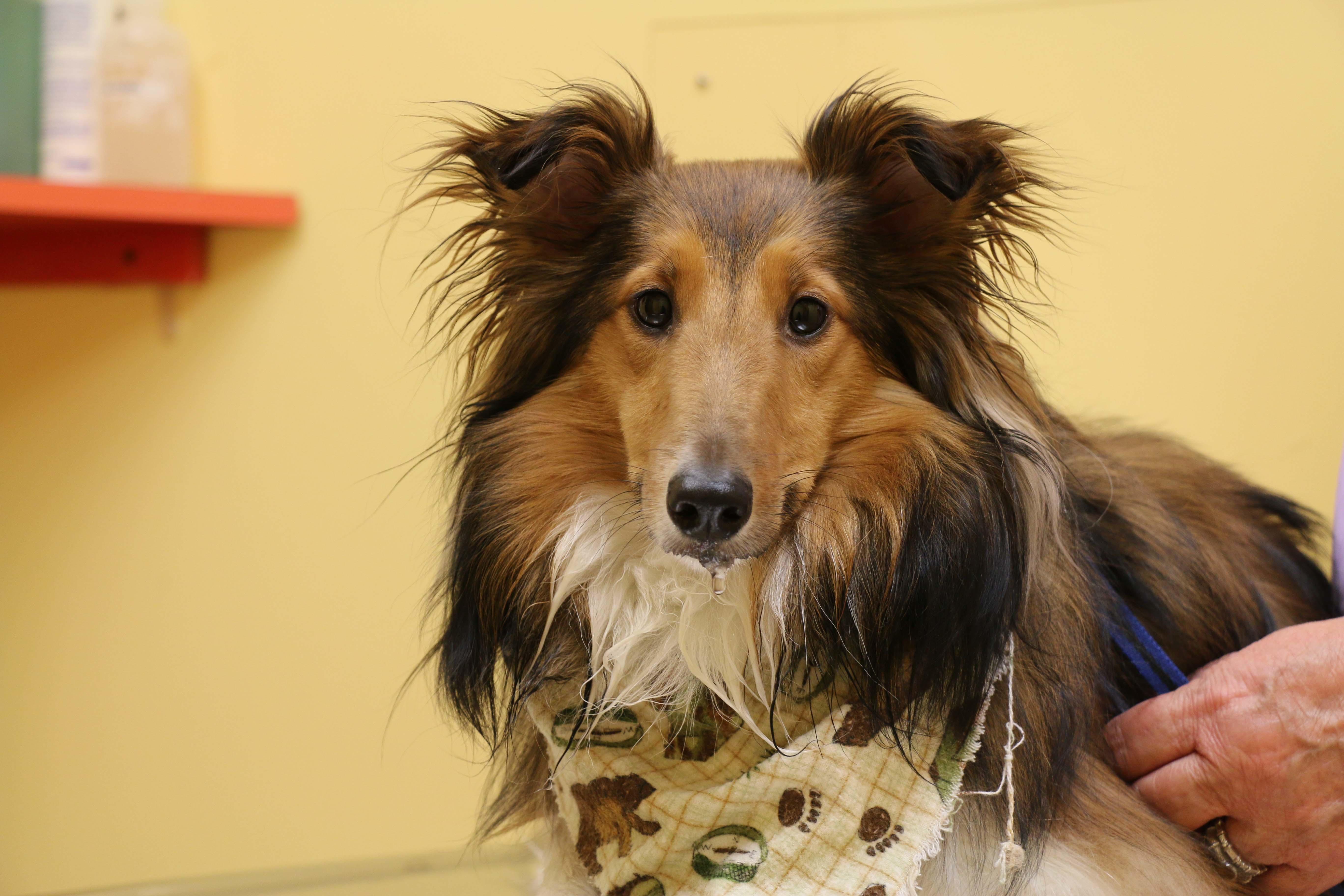 Tranquility Veterinary Clinic