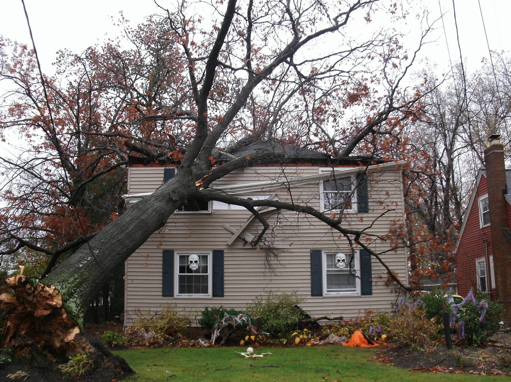 Wind Damage Stutters Disaster Kleenup Kelowna (250)763-1555