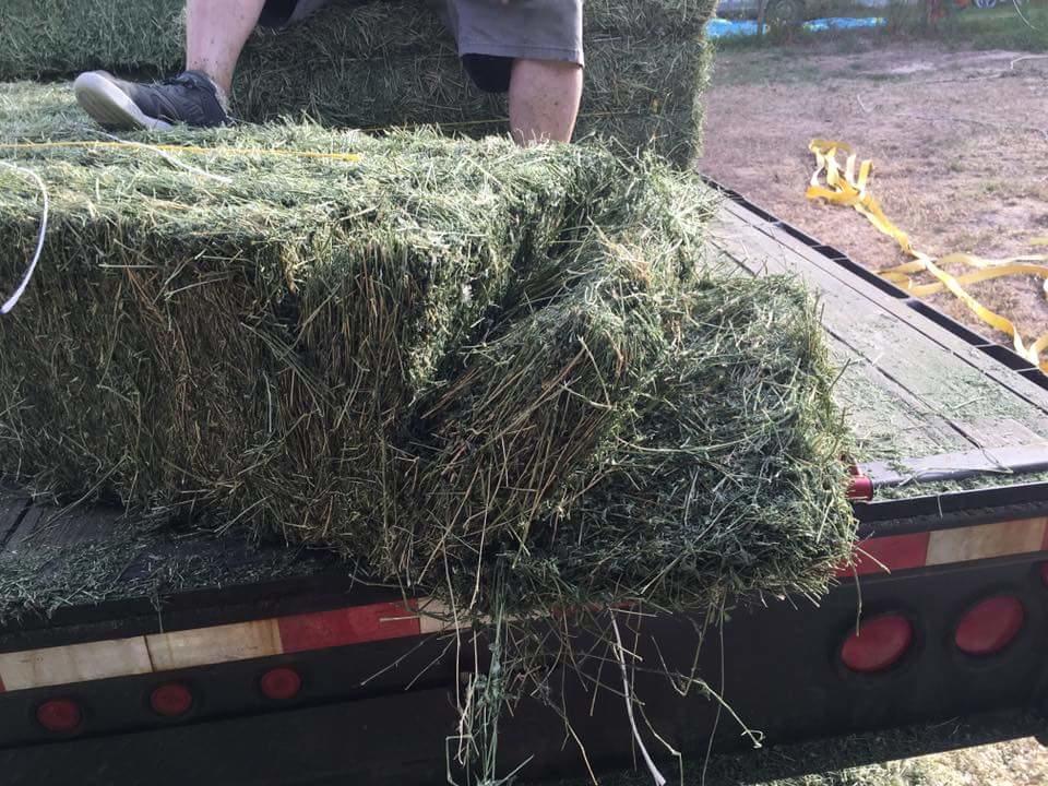 A P Shavings Amp Hay In Conroe Tx 77302