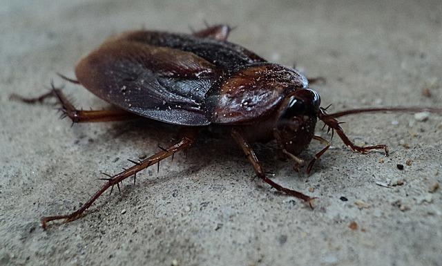 YES Pest Pros
