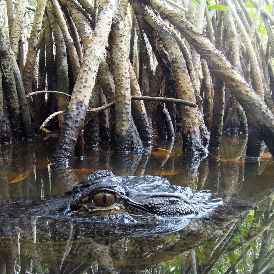 Tour The Glades - Private Wildlife Tours - Everglades City, FL - Cruises & Tours