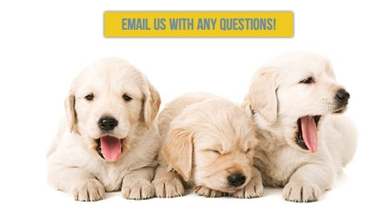 American Dog Club image 5