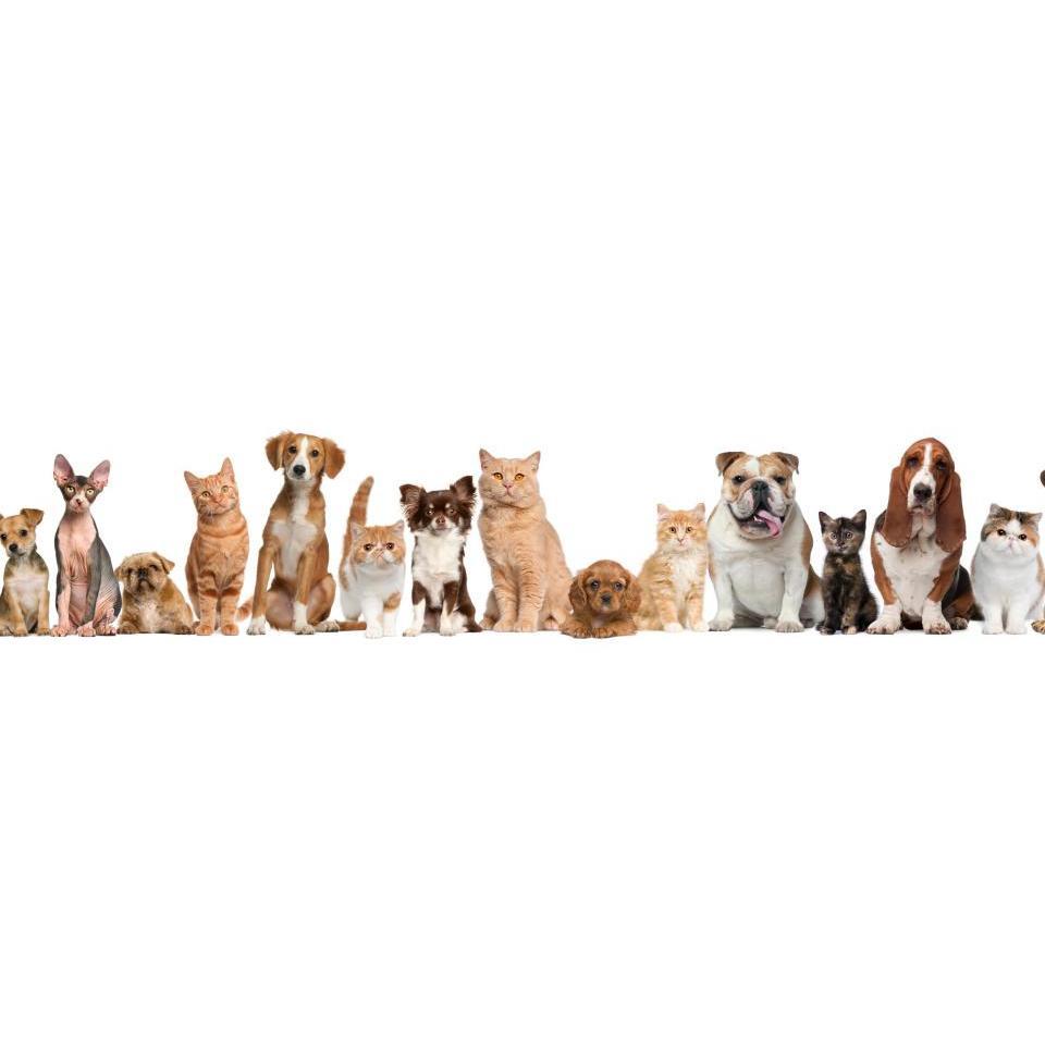 Best Pets Animal Clinic