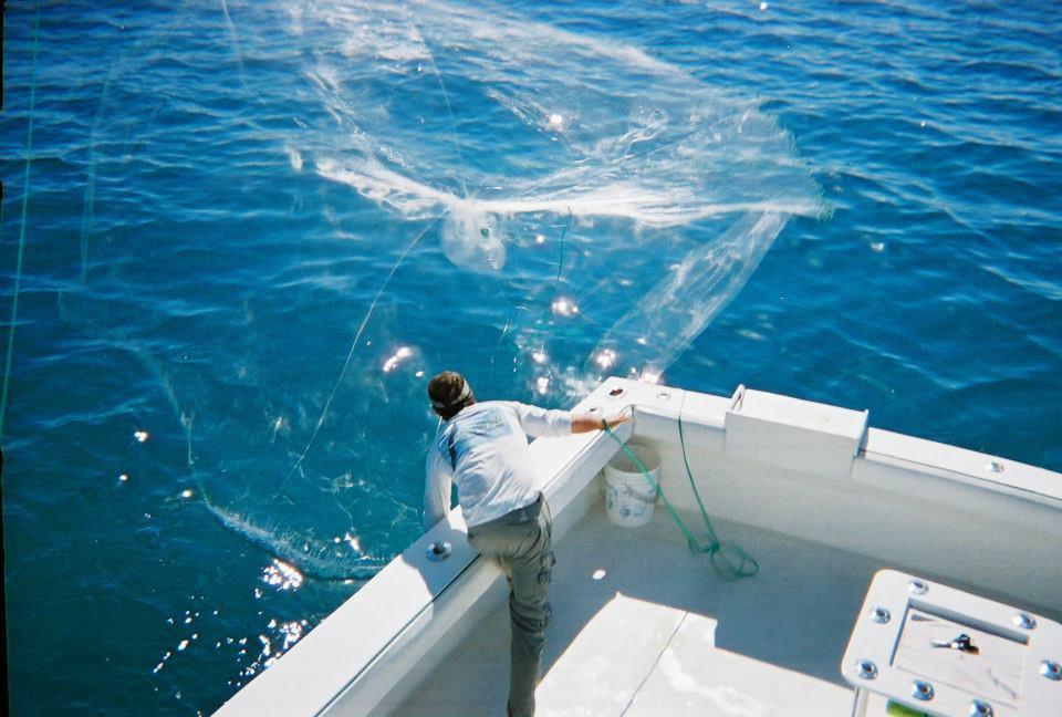 Southpaw fishing key west key west florida fl for Fish in key west