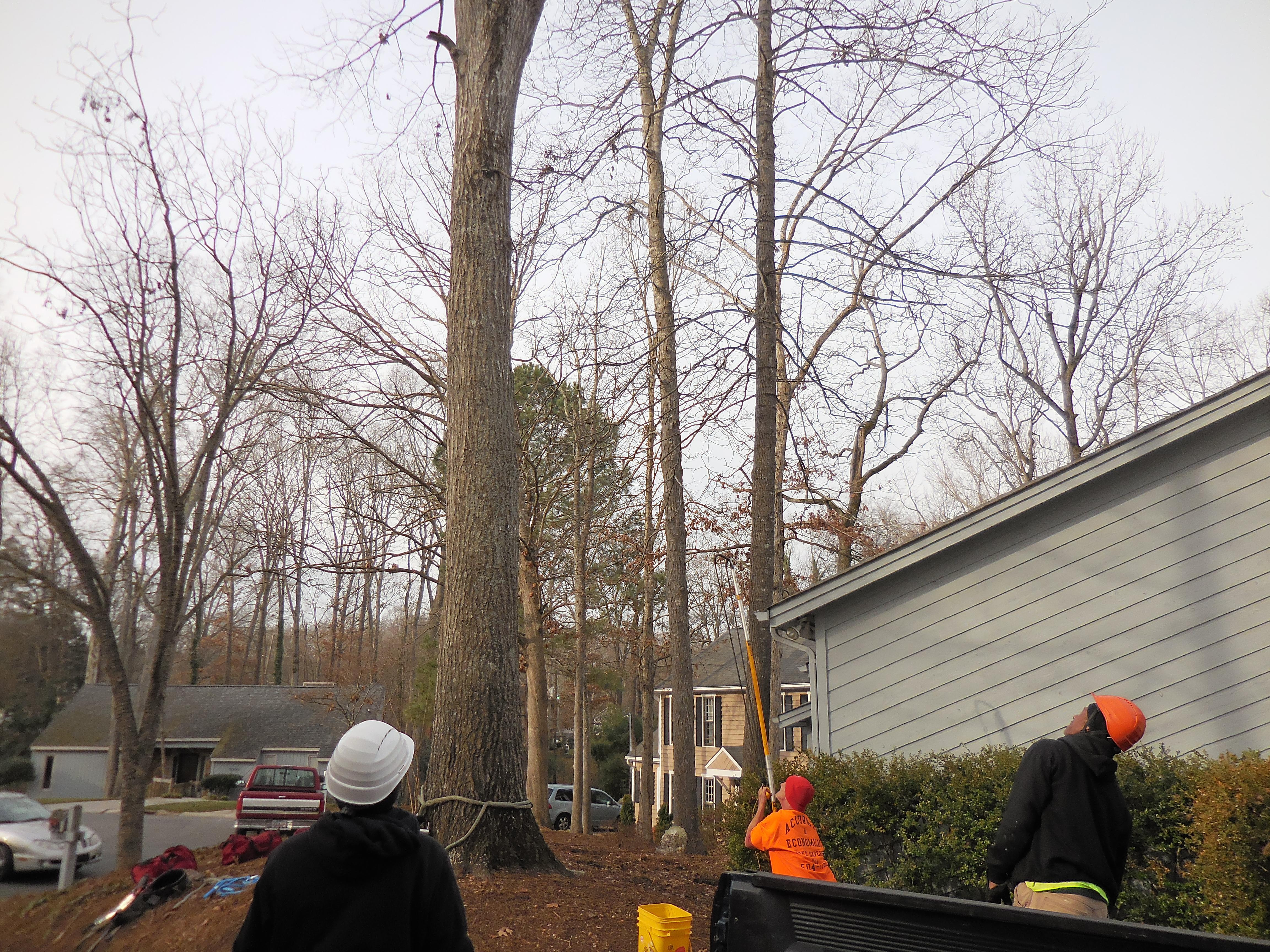 A Accurate & Economical Tree Experts