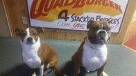 Image 4 | Red Dogs Sandwiches