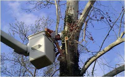 Complete Tree Service Of St Louis Ballwin Missouri Mo