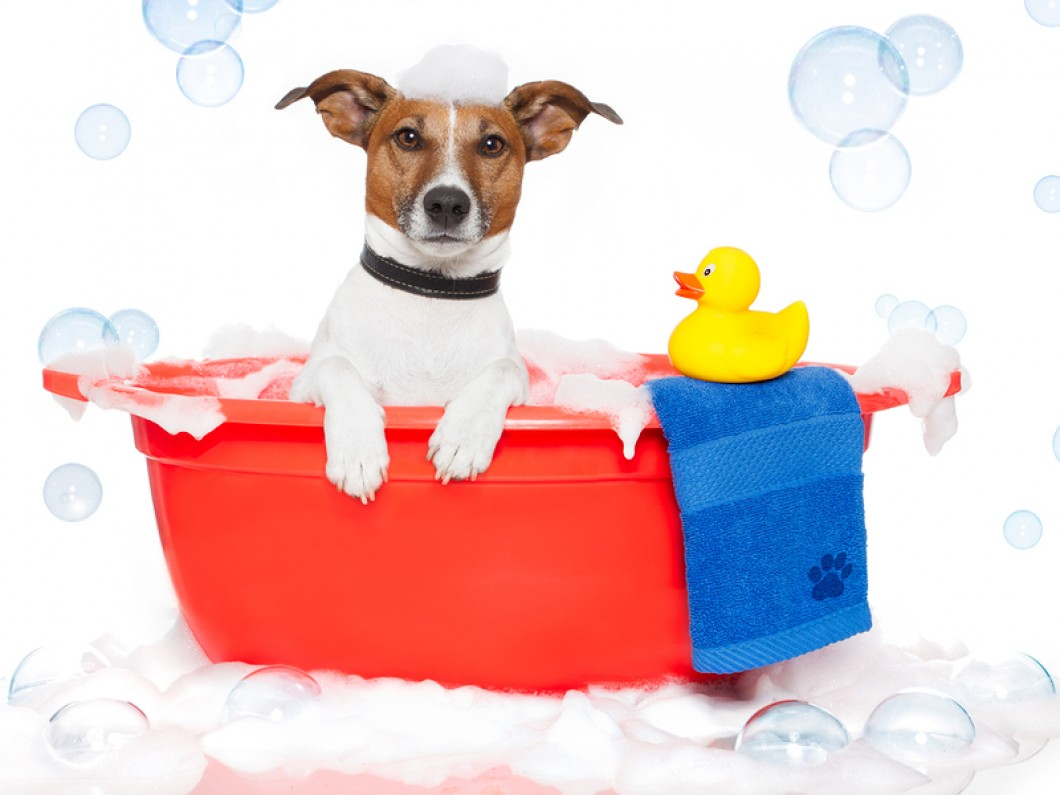 Mobile Dog Grooming Longmont