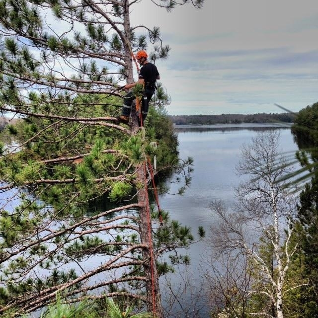 Images Muskoka Evergreen Tree Service Limited