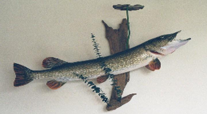Wilderness walt 39 s taxidermy coupons near me in lowville for Fish taxidermy near me