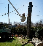 Tree Tops Tree Service Inc