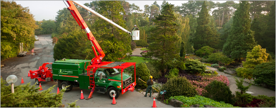 U-SaveMore Tree Service