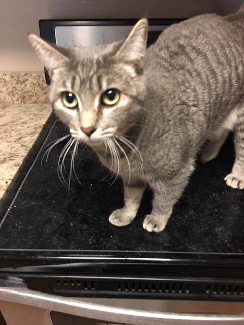 April's-Pet-Care-Cat-Sitting-Scottsdale-AZ