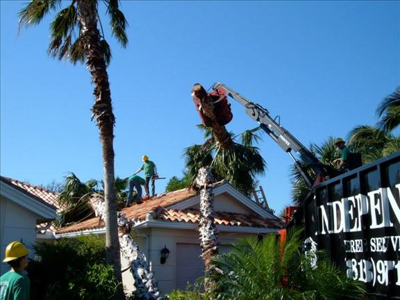 Independent Tree Service Inc image 1