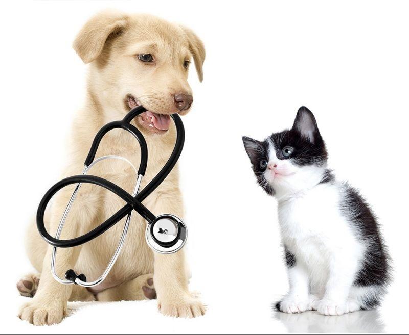 Clínica Veterinaria La Rosa