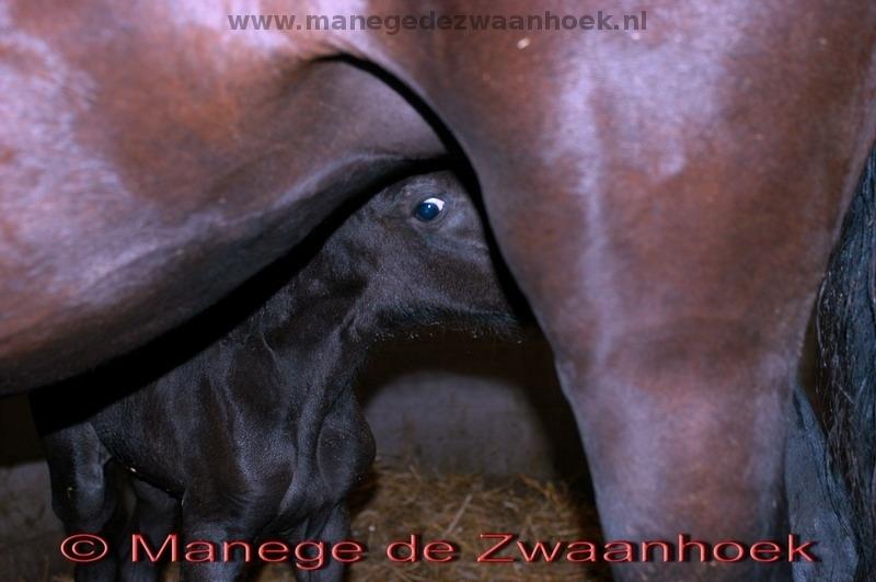 Manege de Zwaanhoek