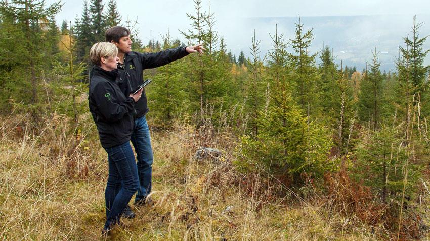 Skogbrukets Kursinstitutt