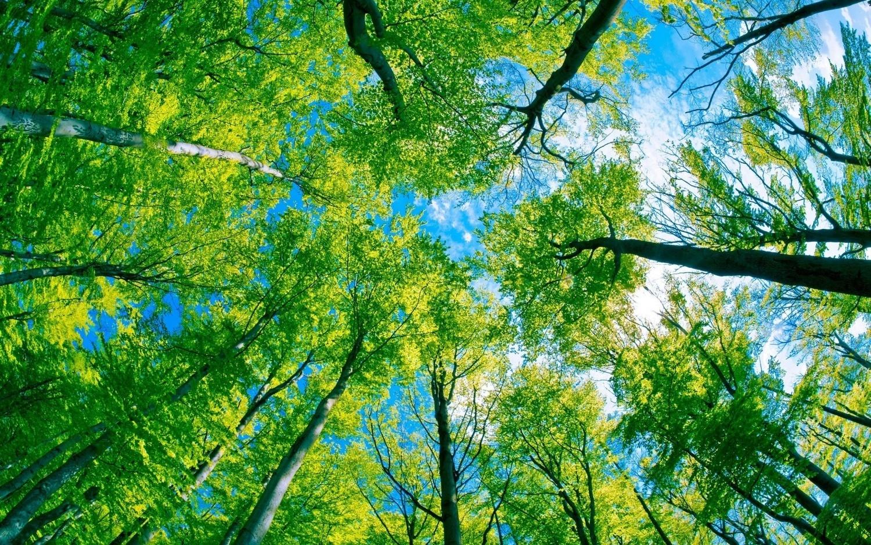 C.I.R. Tree Service