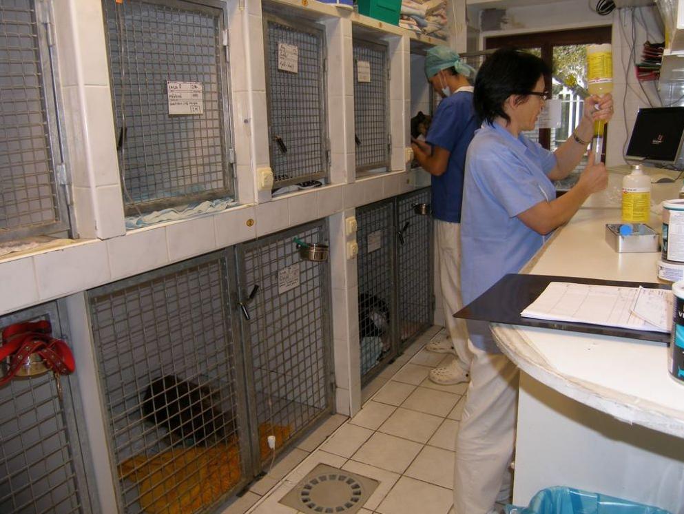 Vetnemo - Veterinární nemocnice Libuš