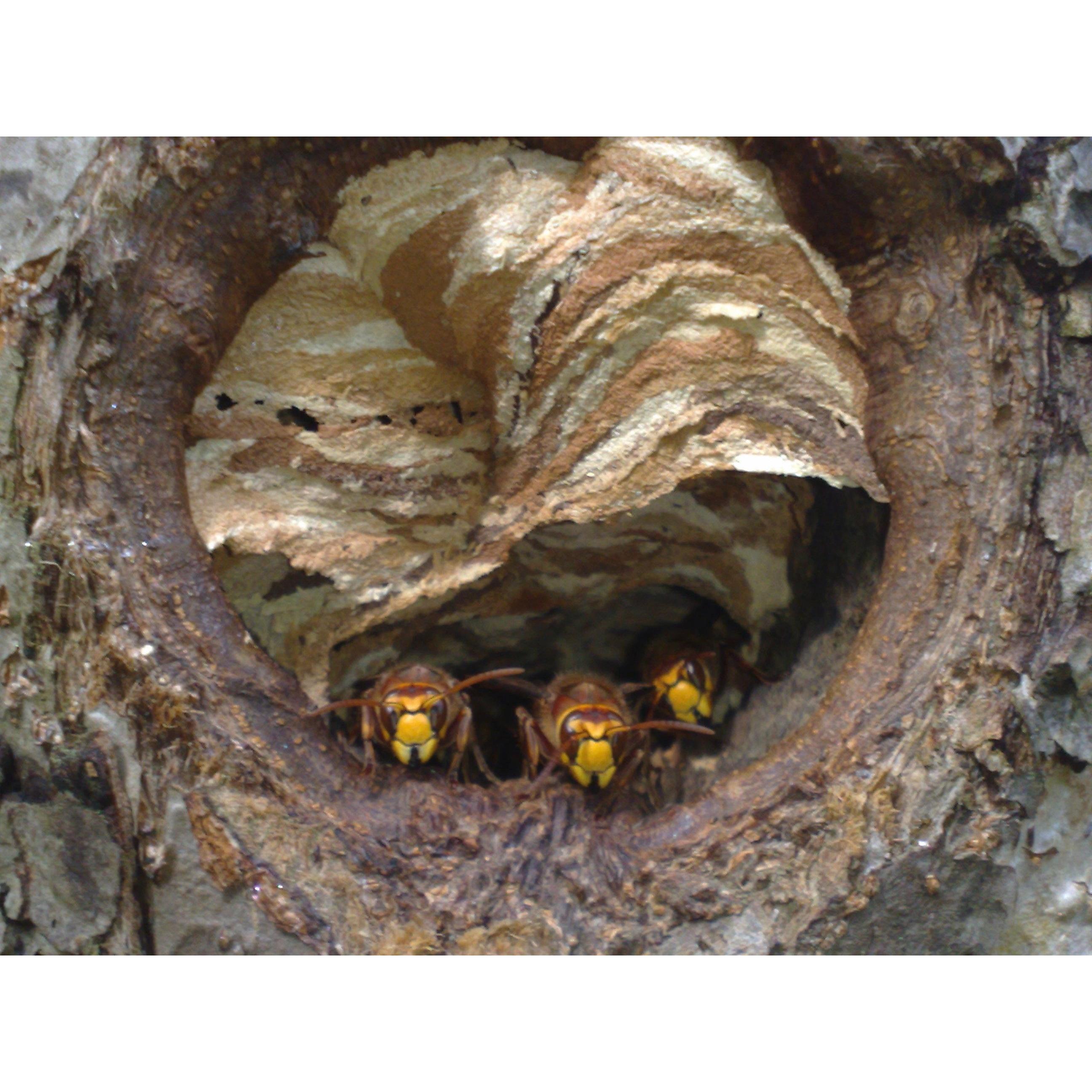 Reddi Pest Ltd - Redditch, Worcestershire B98 9JA - 01527 584213 | ShowMeLocal.com