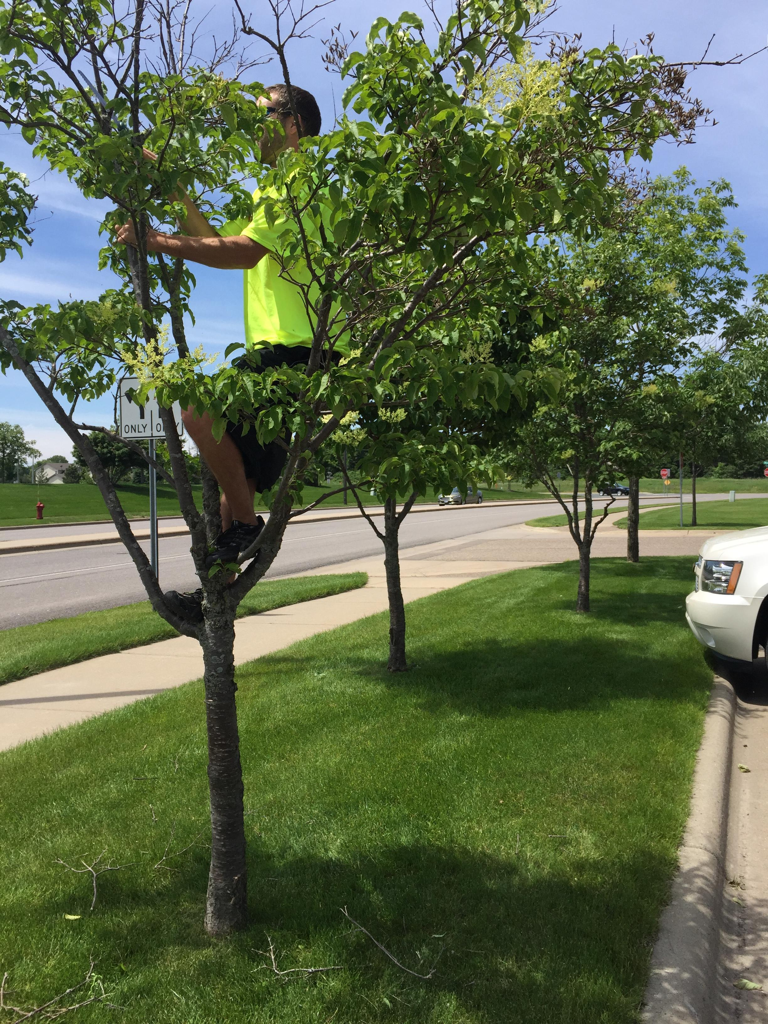 Hansons tree service landscaping llc in elk river mn for Tree and garden services
