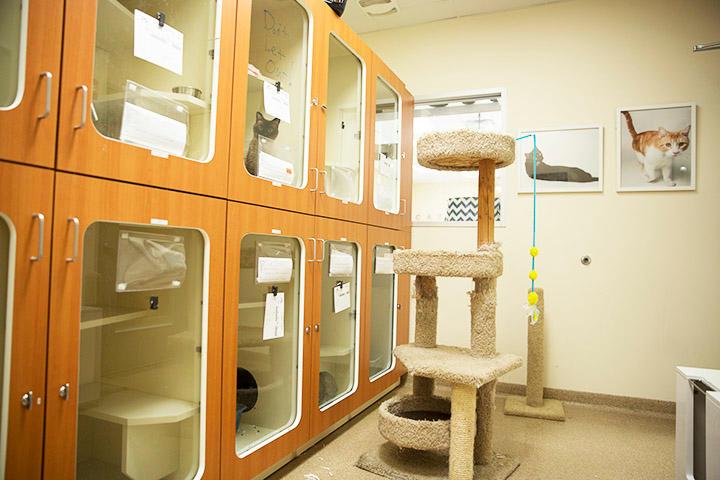 Brixton Pet Hospital & Resort