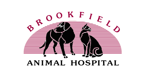 Vets in CT Brookfield 6804 Brookfield Animal Hospital 329 Federal Rd (203)744-9970