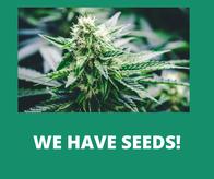 Image 7   Wild Herb Wellness