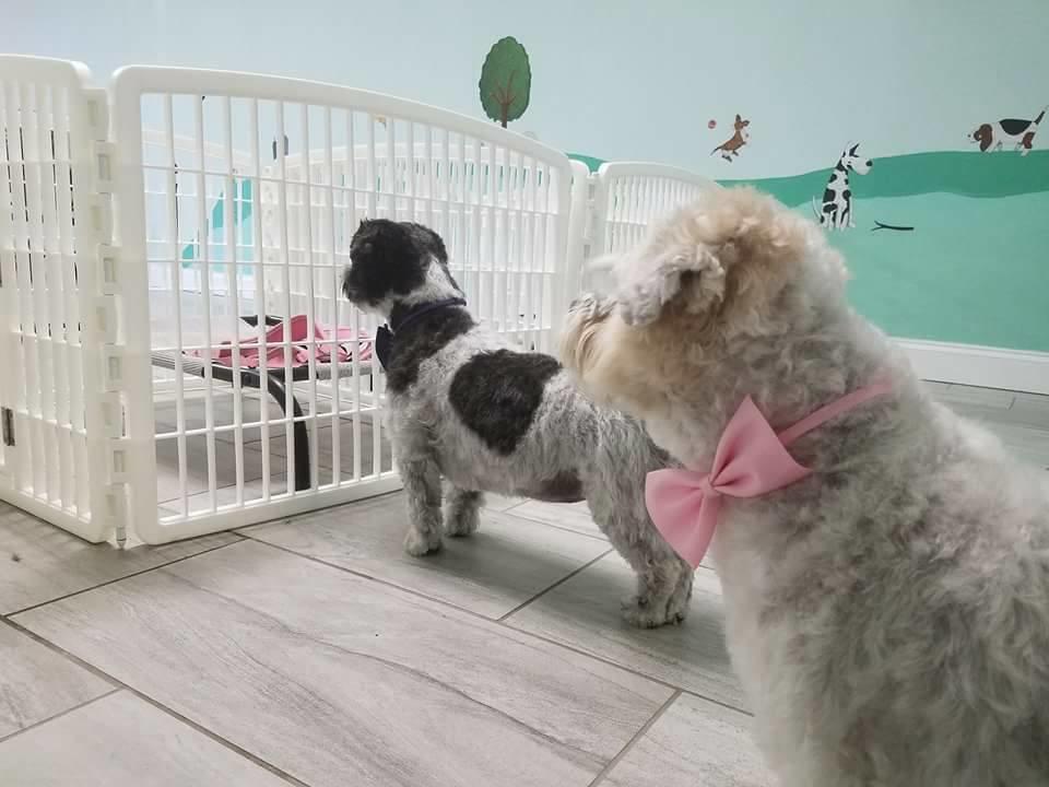Pet Day Care Myrtle Beach Sc