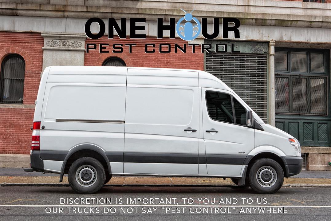 One Hour Pest Control