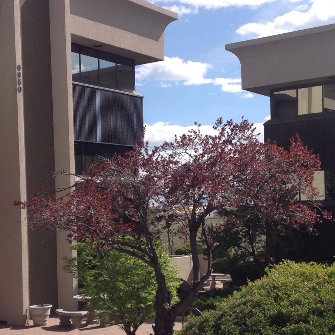 Denver Estate Planning