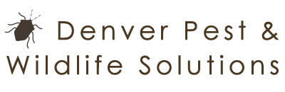 Denver Pest and Wildlife Solutions