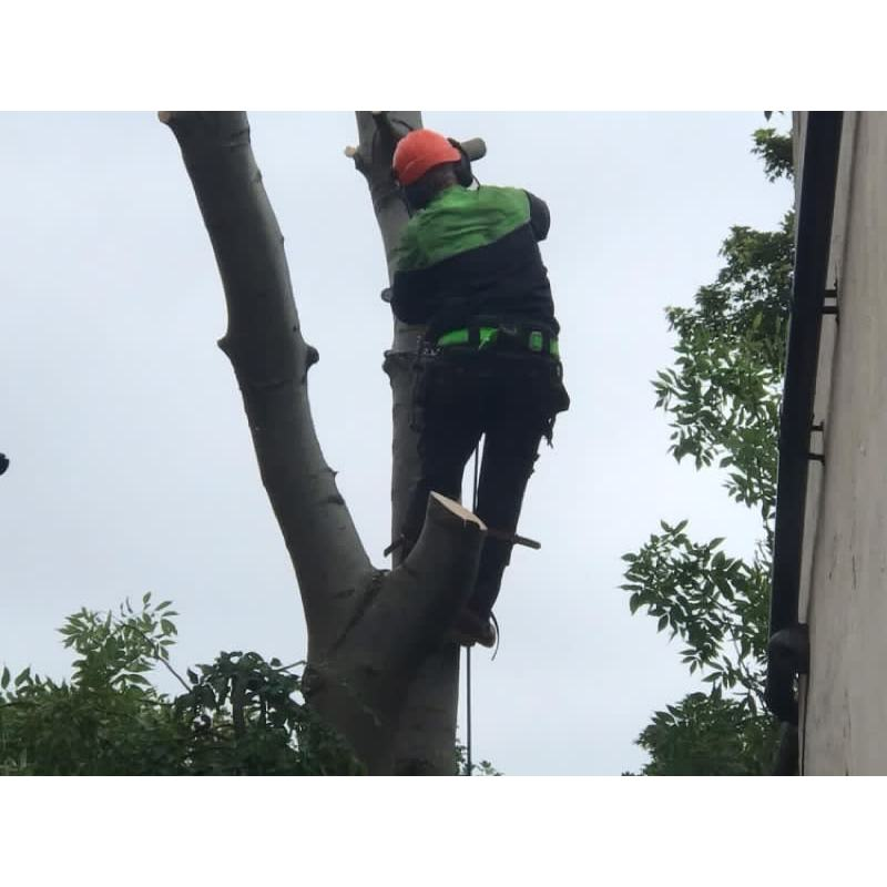 A&T Tree Removal - Birmingham, West Midlands B28 0TY - 07932 614295 | ShowMeLocal.com