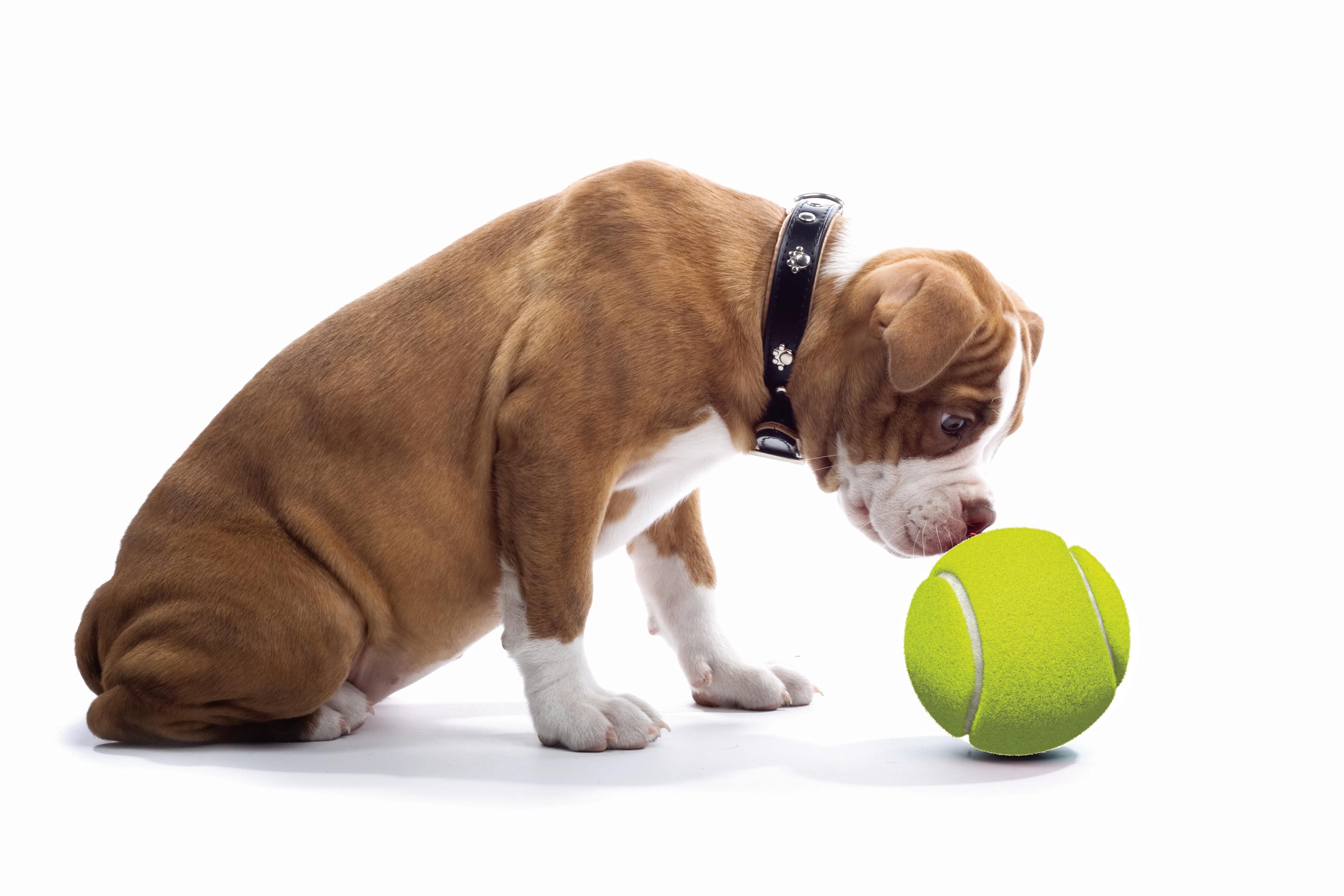Dog Training Temecula