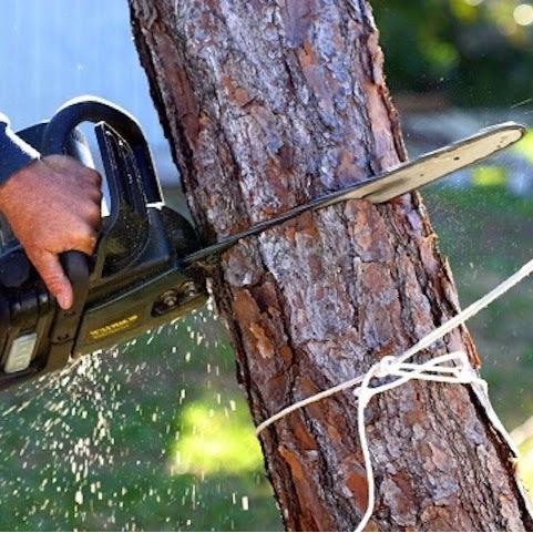 Adams Tree Service LLC