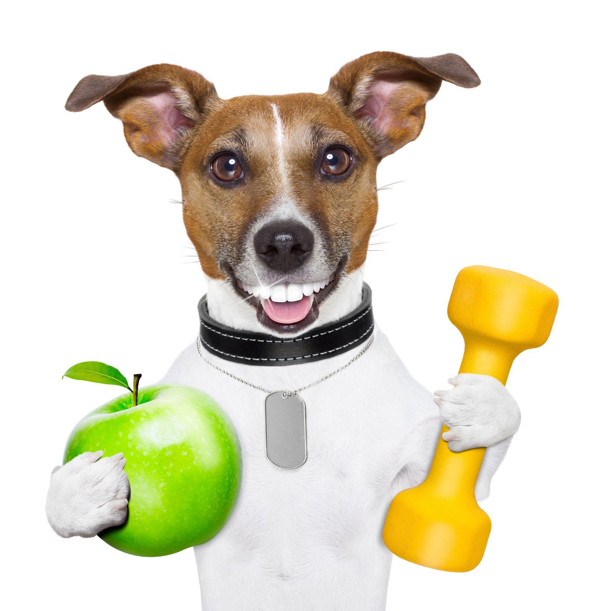 Pawz Dog Grooming
