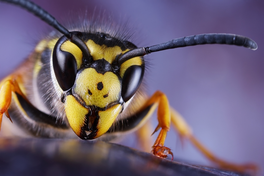 bios sch dlingsbek mpfung e k desinfektion bek mpfung von insekten und ratten n rnberg. Black Bedroom Furniture Sets. Home Design Ideas