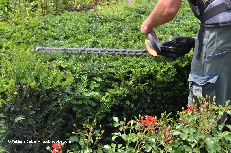 Franke garten und landschaftsbau bayreuth kontaktieren for Garten und landschaftsbau firmen