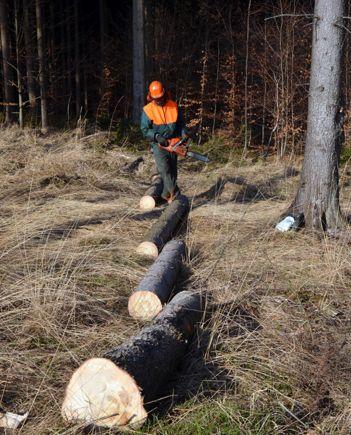 Tmi Metsäpalvelu Metsätimo